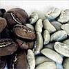 Селекция и гибридизация кофейного дерева