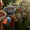 Планета кофе: Бенин