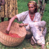 Планета кофе: Ангола