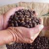 Планета кофе: Камерун