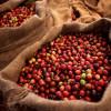 Планета кофе: Республика Конго