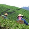 Зеленый чай: полезней, чем думали