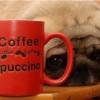 Можно ли выливать остатки кофе в раковину?