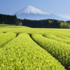 Благоприятные свойства зеленого чая