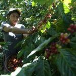 Планета кофе: Бурунди