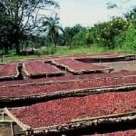 Планета кофе: Демократическая Республика Конго