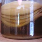 Чайный гриб — как употреблять настой