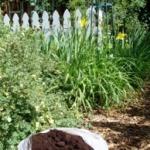 Ваш сад и кофейная гуща