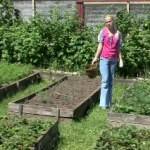 Выращиваем на своем участке