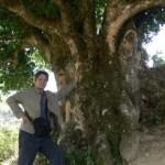 Медом чайного дерева будут лечить рак