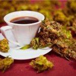 Украинка заваривала чай с коноплей