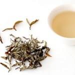 Польза от белого чая