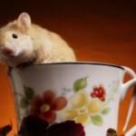 Зеленый чай улучшает память