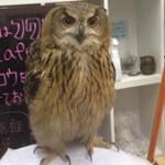 В Японии пьют кофе с совами