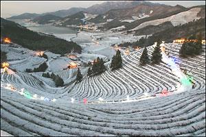 Фестиваль света в корейском Посоне