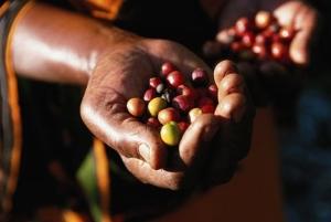 Судьба ближайшего урожая кофе пока неясна