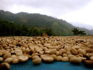Начало сухого сезона в Бразилии усложнит производство кофе