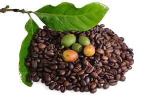 Кофейный семенной фонд под угрозой?