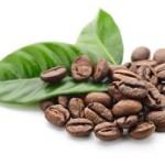 Польза кофейных листьев