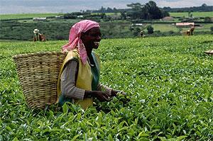 Кения хочет построить прямые поставки чая в Казахстан