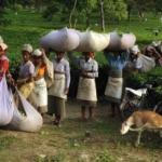 В Индии владельца чайной плантации зарубили работники