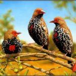 Горький кофе предпочитают редкие птицы